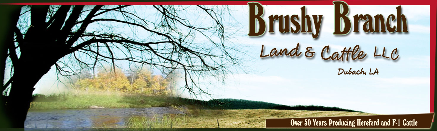 Brushy Branch Land and Cattle LLC